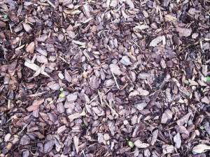 using mulch in your garden